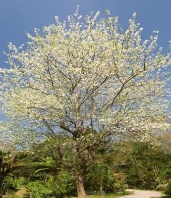 7005638-albero-di-biancospino-sulla-strada-rurale-contro-il-cielo-blu