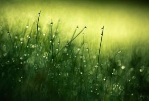 Morning_Dew_III_by_Nitrok