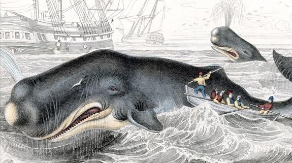 Whaling-hawaii