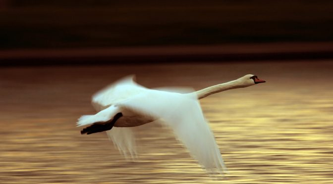 She Moved through the Fair like the swan in the evening moves over the lake