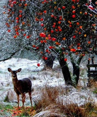Apples in Winter: New Years Eve in Great Brittany