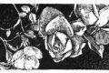 Stamattina mi sono alzata: Fiore di Tomba