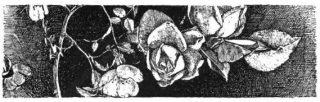 Fiore di Tomba