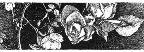 Fiore di Tomba, la versione piemontese