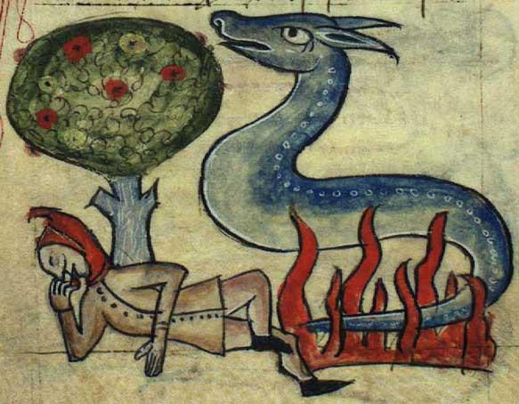 salamandra-kongelige